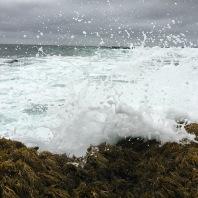 Ocean spray, Montana de Oro